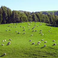 Jonathan Barran Agriculture Photography, Agriculture Photographer in Rotorua NZ