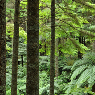 Jonathan Barran Forestry Photography, Forestry Photographer in Rotorua NZ