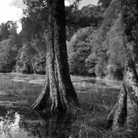 Jonathan Barran Forest Research Photography, NZ Landscape Photographer in Rotorua NZ